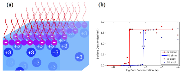 Schematic of system studied; positively charged lanthanide ions (blue circles) dissolve in the water, while the negatively charged surfactant molecules (purple) float on the water surface. (b) Data showing how density of ions at the surfactant surface jumps as the concentration of ions in the bulk water increases (Er=erbium, a heavier lanthanide, Nd=neodymium, a lighter lanthanide). The lines thru data are predictions from computer simulations. From M. Miller et al., Phys. Rev. Lett. 122, 058001 (2019).