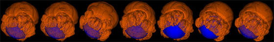 "Images from a computer simulation of an exploding white dwarf star. The orange represents the flame that nuclear ash follows as it pops out of the star, while the blue approximately marks the surface of the star.   The star is approximately the size of the Earth, but contains a mass greater than the sun's.  The images come from a simulation that was presented at the ""Paths to Exploding Stars"" conference March 22 2007 in Santa Barbara, Calif., by University of Chicago scientists."